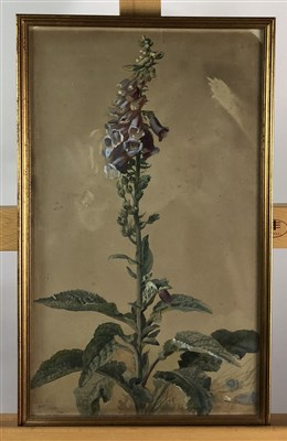Lot 72-Archibald Thorburn foxgloves