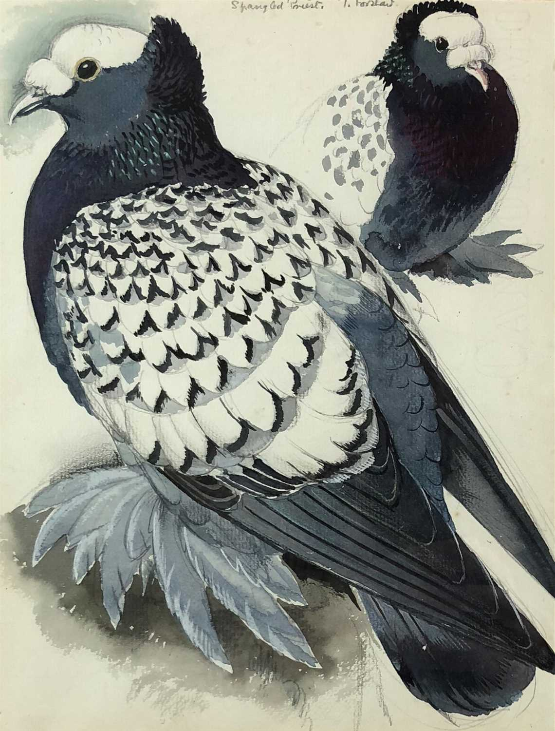 Lot 5 - Charles Frederick Tunnicliffe (1901 - 1979), Spangled Priest