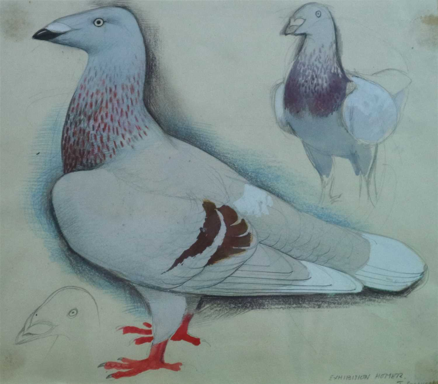 18 - Charles Frederick Tunnicliffe (1901 - 1979), Exhibition Homer