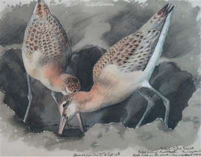 Lot 23-Charles Frederick Tunnicliffe (1901 - 1979), Seabirds