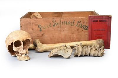 Lot 29 - Anatomy: a French human skeleton