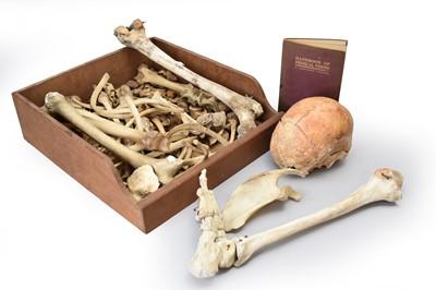 Lot 30 - Anatomy: an anatomical teaching aid human skeleton