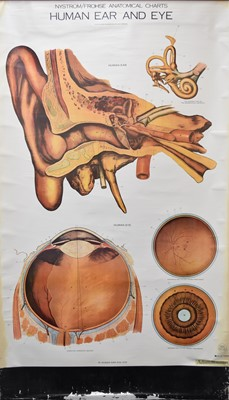 Lot 20 - A collection of various 20th century medical educational posters