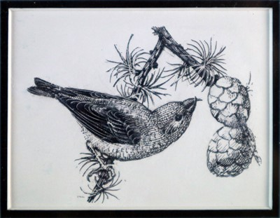 Lot 23 - Charles Frederick Tunnicliffe OBE RA(1901-1979) Crossbill