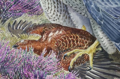 Lot 40 - Charles Frederick Tunnicliffe OBE RA (1901-1979) Peregrine Falcon with Grouse